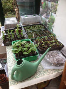 Our seedlings