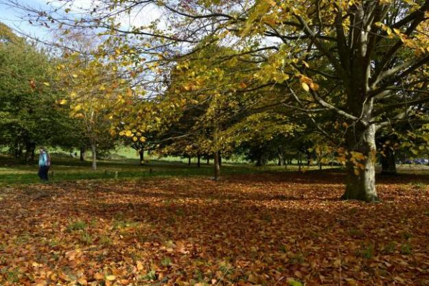 Autumn colours in Stanmer Park.